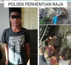 Polisi Kampar Ringkus Ninja Sawit di Perkebunan PTPN V