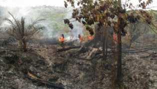 Sudah 731 Ha Lahan Terbakar, Penanganan Karhuta di Riau Tahun 2018 Alami Kemunduran