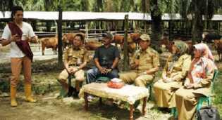 Ini Kelompok Penerima Ternak Sapi 2013