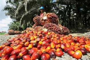 Harga TBS Riau Turun Lagi