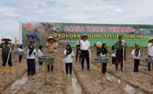 Siak Jadi Lumbung Padi Riau