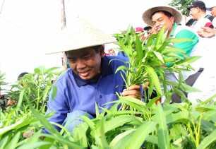 Terinspirasi DR H Firdaus ST MT, Petani Ini Putuskan Tanam Jagung dan Singkong