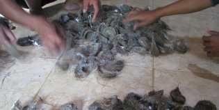 Ketahuan Curi Sarang Burung Walet, Pencuri Ini Lompat Dari Lantai 2