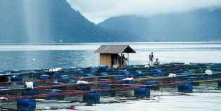 KLH Minta Semua Pihak Selamatkan Danau Maninjau