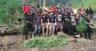 Polri dan BNN Temukan 15 Hektar Ladang Ganja di Aceh