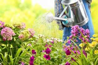 Siram Bunga Pagi Hari Dibelakang Rumah, Aju Malah Jadi Korban Perampokan