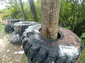 Bagaimana Ban Ini Membungkus Pohon di Purwakarta? Begini Ceritanya