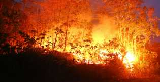 Berikut Jadwal Praperadilan SP3 Perusahaan Pembakar Lahan Jilid II