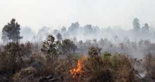 Kebakaran Lahan Kembali Terjadi, Kali Ini di Mandau