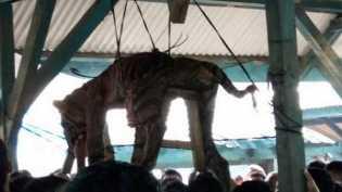 Penampakan Harimau yang Digantung dan Jadi Tontonan Warga