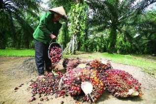 Harga Sawit di Riau Naik Rp 35,08/Kg