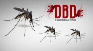 Terus Bertambah, 87 Orang di Pekanbaru Terserang DBD Hingga Pertengahan April 2018