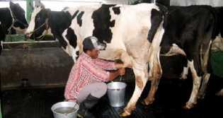 Pemerintah Akan Buat Aturan Baru Terkait Susu, Tujuannya Ini