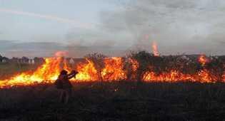 Dalam Dua Minggu Ini, 20 Hektar Lahan di Inhu Terbakar