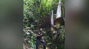 Ditemukan Bunga Bangkai di Kampar Riau Tertinggi di Dunia