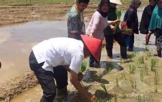 Firdaus Ikut Tanam Padi Bersama Masyarakat di Pulau Sarak-Kampar, Baharuddin: 'Bapak Harus Monang..!