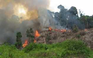 Kebakaran Hutan dan Lahan Dikhawatirkan Jadi Modus Sindikat Narkoba