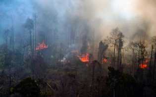 Hutan Lindung Bukit Betabuh Kuansing Terbakar