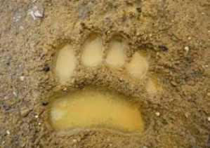 2 Kamera Pengintai Dipasang Pasca Berkeliarannya Seekor Harimau di Kabupaten Inhu
