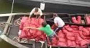 Tiga Ton Bawang Merah Ilegal Dimuat dalam Bus Penumpang