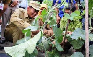 Firdaus - Ayat Berhasil Perkuat Program  Pertanian