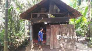 Miris, Satu Keluarga di Rengat Inhu Tinggal di Bekas Kandang Sapi