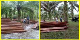 Polisi Ringkus Cukong Illegal Logging Biosfer Giam Siak Kecil