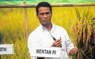 Cegah Kemerosotan Harga, Pemerintah Akan Serap Gabah Petani