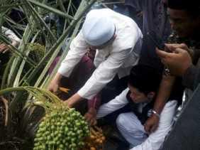 Pekanbaru Panen Kurma Perdana, Mustafa Umar: Ini Isyarat Tuhan, Semoga Riau Bisa Jadi Penghasil Kurm