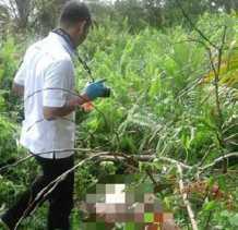 Mayat Wanita Membusuk di Kebun Sawit Warga Pelalawan