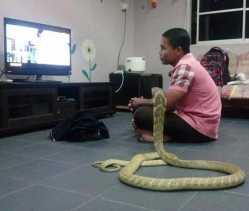 Pria Ini Nikahi Ular Cobra, Bahkan Sampai Tidur Bareng