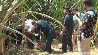 Kisah Wakil Ketua DPC PPP Jombang yang Berakhir di Kebun Tebu