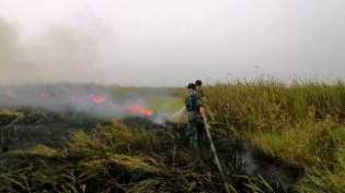 Tentang Gambut, Kemarau, dan Kebakaran Lahan di Riau