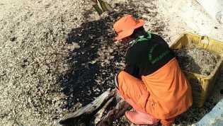 Kagetnya Warga Saat Lihat Minyak Hitam Misterius di Pulau Pari